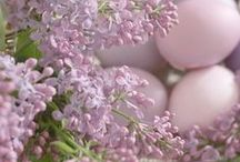 Easter/Spring / by Alison Russell