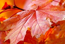 Autumn / by Alison Russell