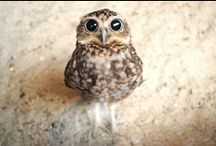Owl.  / by Audrey Clinton
