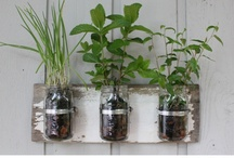 tomatoes and ugly hats / by Kelly George