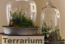 Terrariums, Fairy Gardens & House Plants