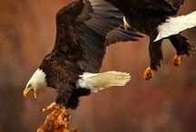 EAGLES / by Mary Young