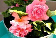 """Gardening / """"To plant a garden is to believe in tomorrow.""""                              -Audrey Hepburn"""