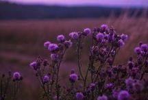 Violet / by Paule Galarneau