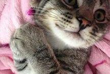 Cat-atonics