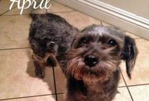 WE FOUND FUREVER HOMES / by WaggingDog Rescue