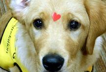 Service Dogs / by WaggingDog Rescue