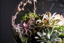 terrariums / by Whitney Lampher