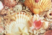 Sea/Shells / by Stephanie Vinatieri