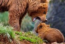 Mommy / by Paule Galarneau