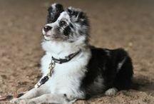 Dog Training / by Whitney Lampher