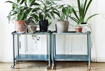 plants / by Tarah Sutton