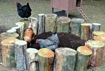 Chickens! / A hen is only an egg's way of making another egg.