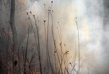 fog rain snow frost / by Elizabeth Archers