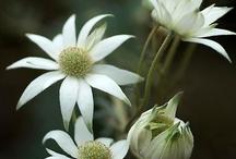 Flowers & Plants / 花と植物
