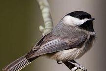 Birds / 小鳥