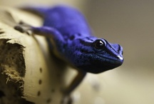 Amphibians & Reptiles / 両生類 と 爬虫類