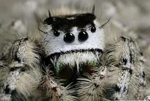 Spiders / クモ 蜘蛛