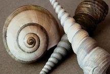 Seashells / 貝殻