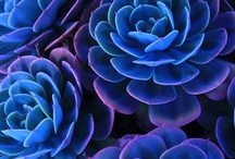 Succulents / 多肉植物