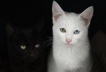 Dog & Cat / 犬と猫