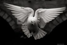 Wings / 翼