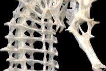 Skeleton / 骨格
