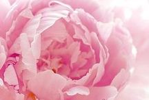 Flowers I love....
