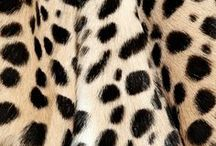 Animal Magnetism / All things animal print / by Luxuria Jewellery Boutique