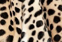 Animal Magnetism / All things animal print: leopard | leopard print | animal print | tiger | zebra print |