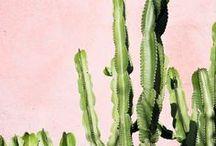 PLANTS & BOTANICALS / Plant Photography Inspiration