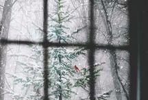 simple christmas / Keep it simple: lights, snow, greens, kids, dogs❤️