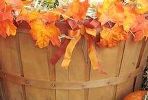 Fall & Pumpkins / by B L