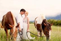 wedding stuff / by Nicole Siemens