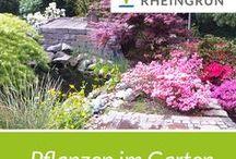 Pflanzen im Garten / Wunderschöne Pflanzbeispiele, Blumen und Ideeen von Rheingrün. Pflanzplanung