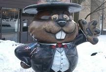 My little Groundhog