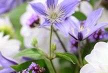 Shoot's Guest Gardening Board / Share your garden and plant photos in our guest board! Open to contributors. Pls ask to be added on our FB time line http://www.facebook.com/ShootGardening Please only post images of plants and gardens. Strictly NO ADS or written text in the actual images please.