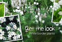 White border plants / by Shoot Gardening