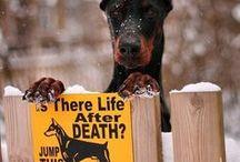 Doggy Care