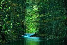 nature / natuur
