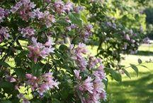 Jannes Have / Billeder fra min egen skønne have.