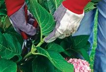 Gardening ideas / Tips to growing flowers and veggies. / by Teri Morfenski