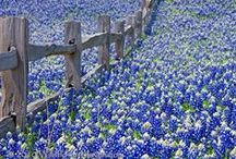 Spring into Country / Celebrating everything spring in the country. / by Country Magazine