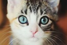 I Love Cats / by Paige Gulley