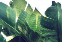 Tropical / #Tropic-all #Tropical #Exotic #Pineapple #Summer #Ocean #Jungle #Tropic # Exótico #Piña #Palmeras #Verano #Selva #Oceano