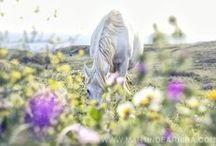 Spring Tales / Podrán cortar todas las flores, pero no podrán detener la primavera.  /Pablo Neruda