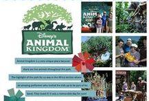 Disney SB - Animal Kingdom