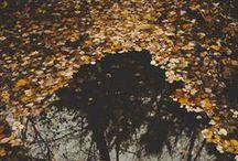 Fall fables / «El otoño es un andante melancólico gracioso que prepara admirablemente el solemne adagio del invierno»  Cuando el sol se oculta en la tierra. /Otoño