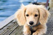 So Cute!!! / by Genifer Pohrman
