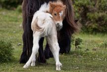 Equine Friends / by Ashton Selig